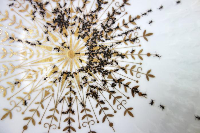 посуда с муравьями Эвелин Баклоу 4 (700x466, 413Kb)