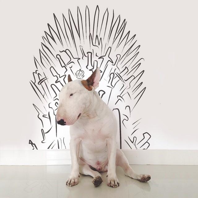 смешные фото собак 1 (640x640, 184Kb)