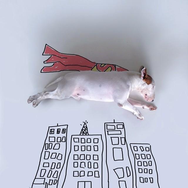 смешные фото собак 5 (640x640, 195Kb)