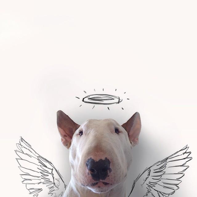 смешные фото собак 7 (640x640, 121Kb)