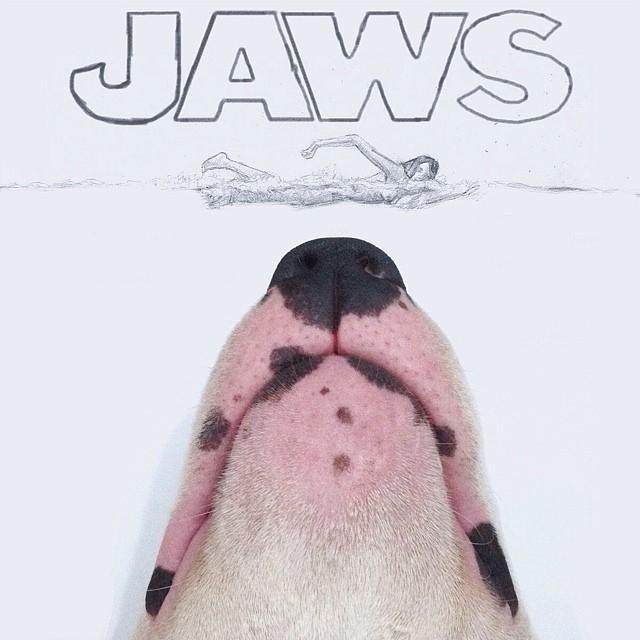 смешные фото собак 11 (640x640, 194Kb)