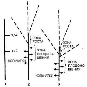 244cfa0d2ec3c60f0127cabcb297e177 (299x300, 32Kb)