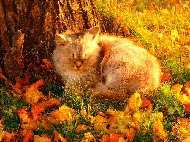 Осенние коты1 (640x480, 276Kb)