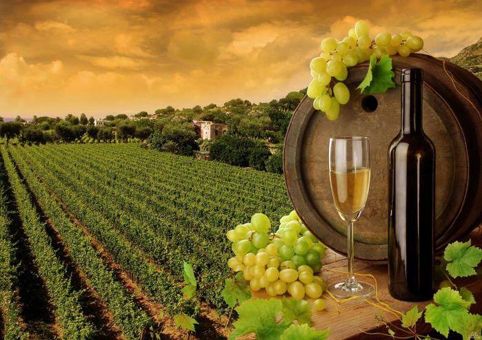 4638534_238137_vinogradnik_vinograd_bochka_butylka_vino_2685x1895_www_GdeFon_ru (700x494, 85Kb)