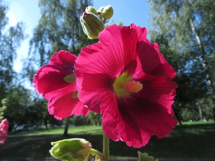Красивые цветы от читательницы 2 (700x525, 337Kb)