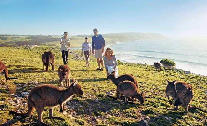 3085196_kangaroo_island_06 (700x425, 260Kb)