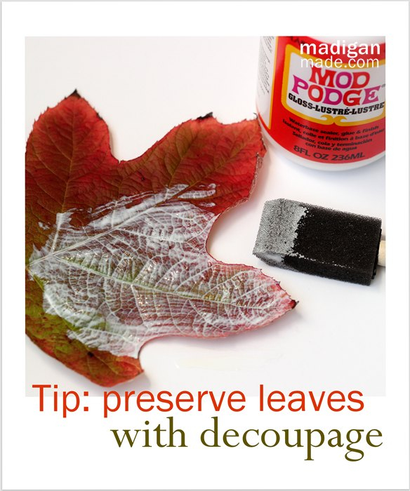 Can-you-preserve-fall-leaves-with-Mod-Podge-00 (584x700, 305Kb)