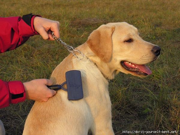 labrador-grooming_0 (600x450, 188Kb)