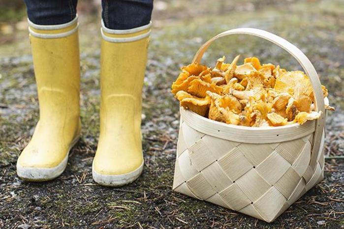 Самые интересные и необычные места для сбора грибов в разных странах