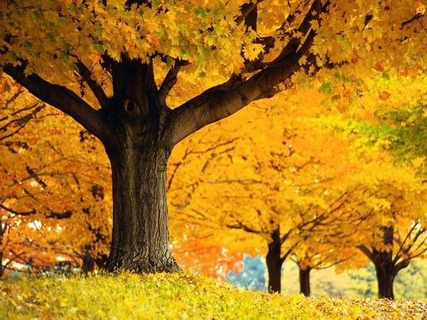 Картинки по запросу красивые фото осенней природы