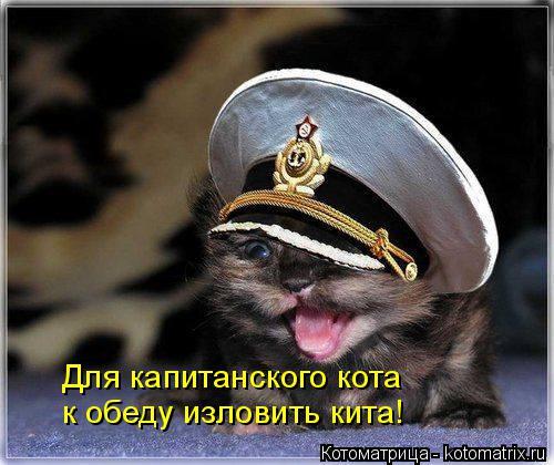 kotomatritsa_V (500x420, 193Kb)