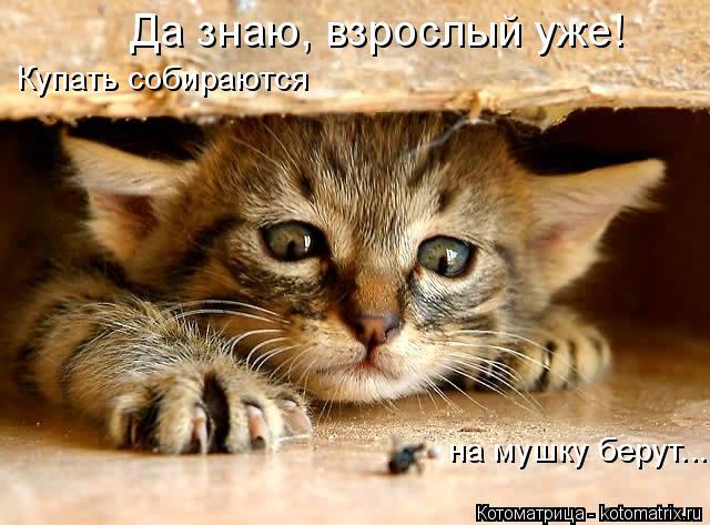 kotomatritsa_ffk (640x473, 284Kb)