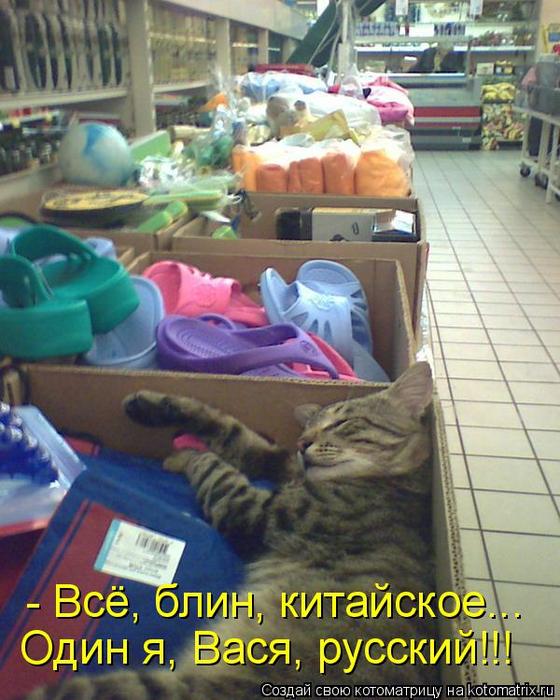 kotomatritsa_hs (560x700, 444Kb)
