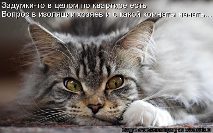kotomatritsa_L (700x436, 256Kb)