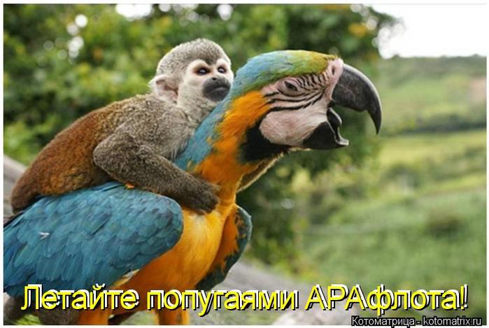 kotomatritsa_j (700x469, 332Kb)