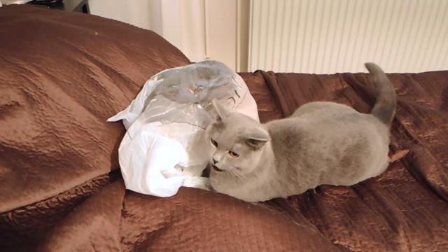 3821971_Cat_fail__plastic_bag_webm_snapshot_00_02_2014_09_12_19_11_45 (640x360, 29Kb)