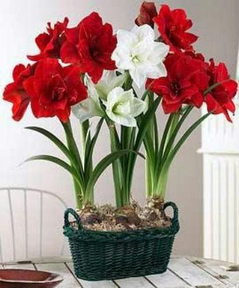 как ухаживать за комнатными растениями цветами, как подкармливать домашние растения, Хьюго Пьюго рукоделие,