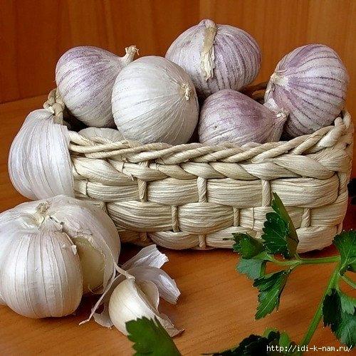 как посадить чеснок осенью, как посадить озимый чеснок, когда высаживать озимый чеснок. Хьюго Пьюго рукоделие,