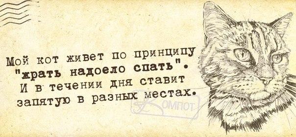 1411671202_frazki-2 (604x280, 196Kb)
