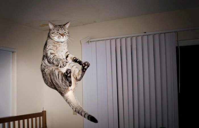 Jumping-Cats-12 (700x449, 191Kb)
