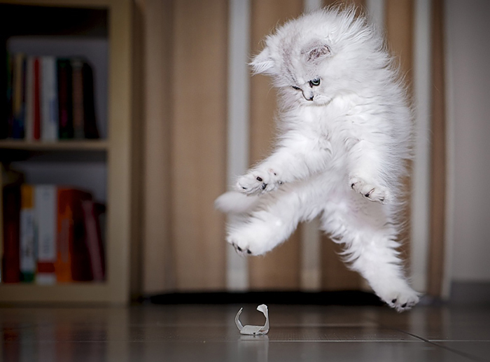 Jumping-Cats-14 (700x517, 229Kb)