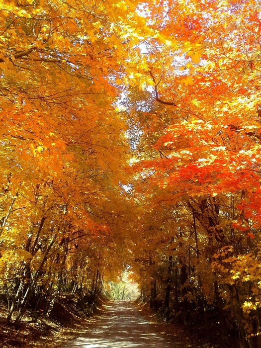 Fall_Colors_28 (525x700, 236Kb)