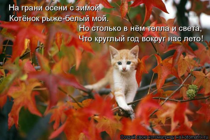 kotomatritsa_ah (700x465, 378Kb)