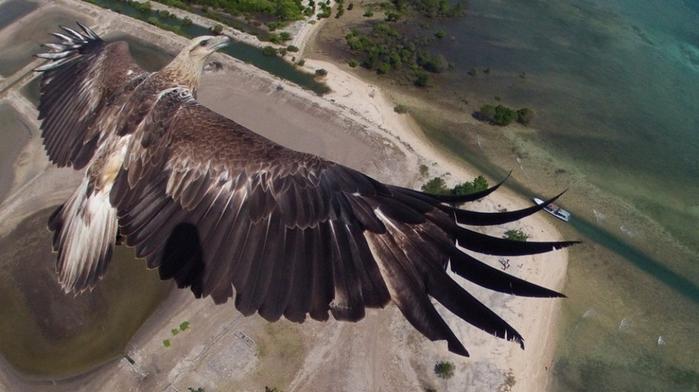 фотографии с высоты птичьего полета 1 (700x392, 279Kb)