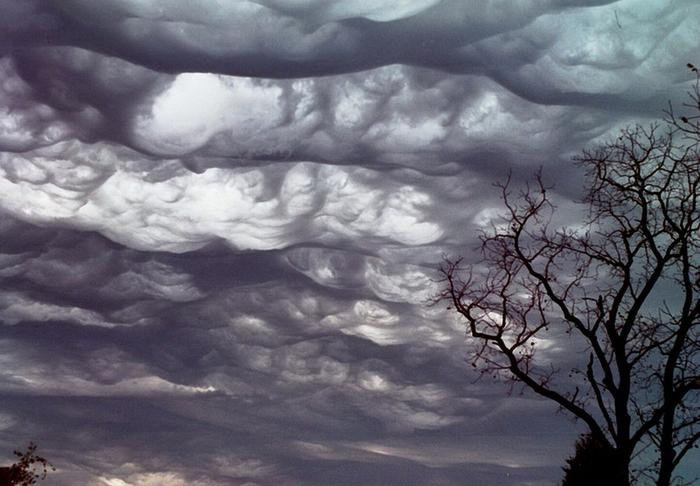 облака асператус фото 5 (700x486, 304Kb)