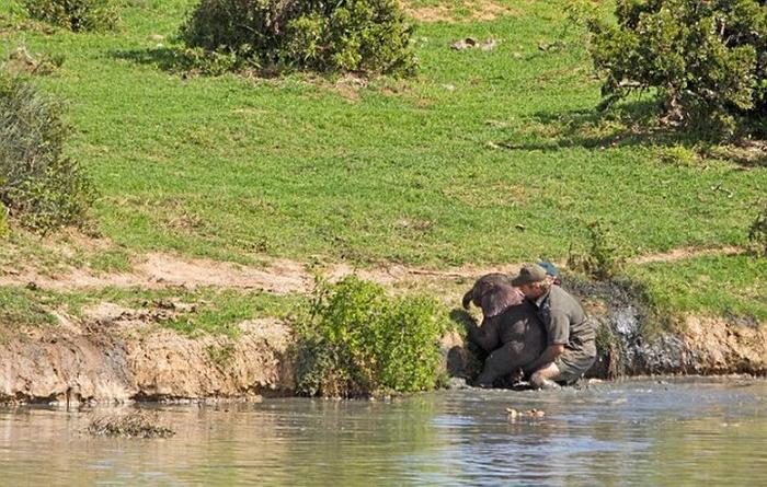 спасение слоненка фото 3 (700x445, 411Kb)