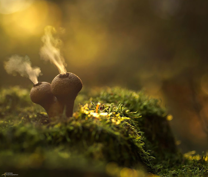 5145824_mushroomsfoto_1 (700x595, 60Kb)