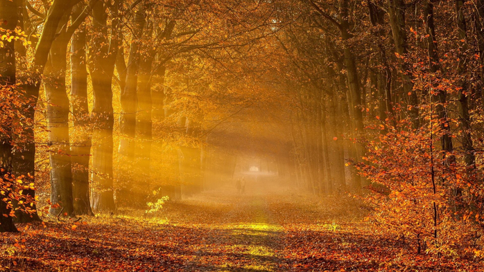 _Autumn_0046 (700x393, 459Kb)