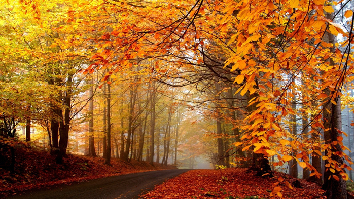 _Autumn_0086 (700x393, 516Kb)