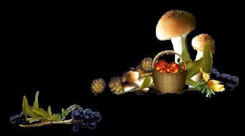 грибы (500x279, 85Kb)