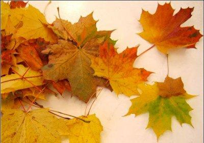 Розы из осенних листьев своими руками (6) (400x281, 119Kb)