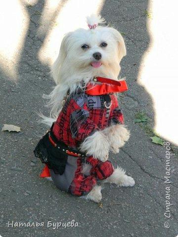 выкройки одежды для собак, как сшить одежду для собаки, Хьюго Пьюго одежда для собаки,