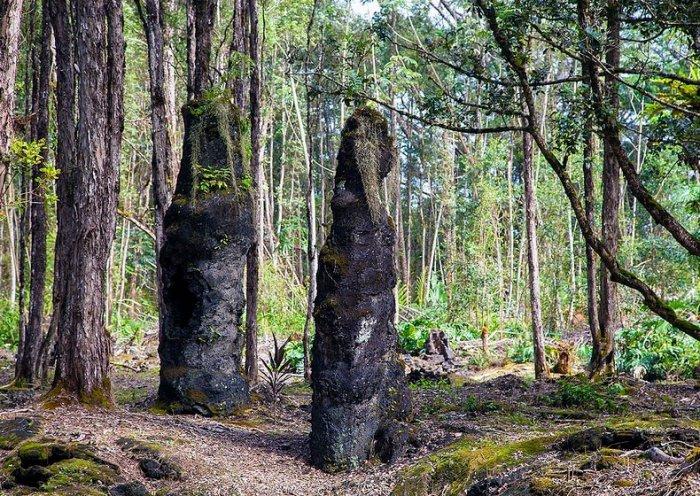 лес лавовых деревьев на гавайях 3 (700x496, 566Kb)