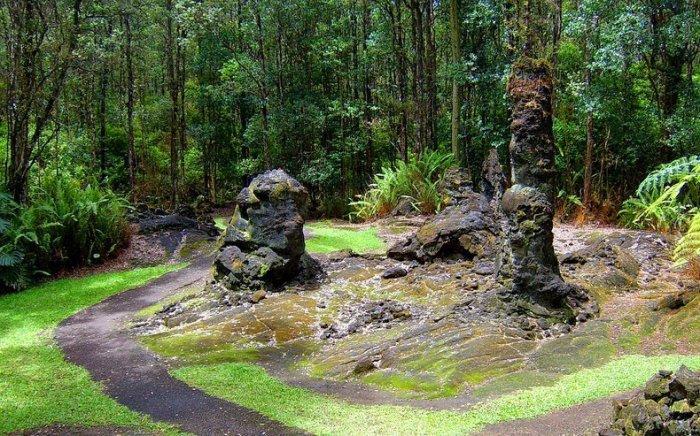 лес лавовых деревьев на гавайях 5 (700x436, 460Kb)
