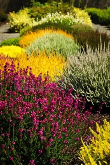 9417875-beautiful-colorful-flower-garden-with-various-flowers (467x700, 439Kb)