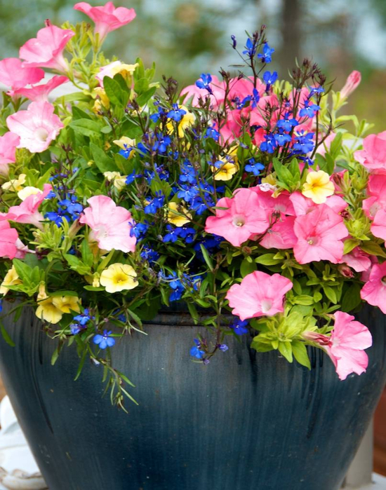 Beautiful-Decoration-Flower-Garden-Ideas-For-Decoration-Your-Small-Garden-Pink-And-Blue-Flowers-For-Beauty-Decoration-Small-Flower-Garden (1) (550x700, 467Kb)