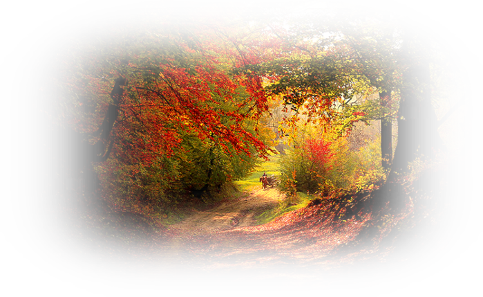 105579199_autumn_in_the_forest_by_valiunicd5j0w6d (700x429, 682Kb)