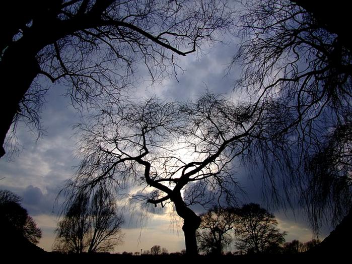 trees-190865_640 (700x524, 800Kb)