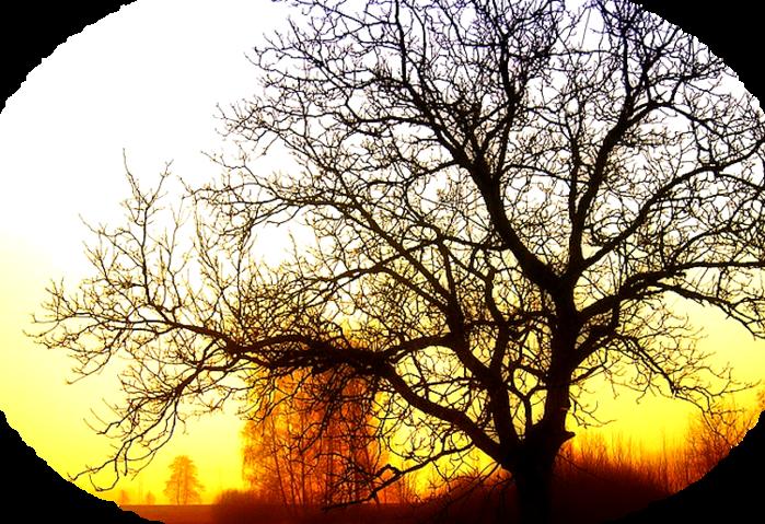 tree-77271_640 (700x479, 727Kb)