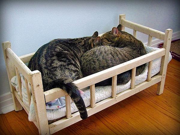 Из чего сделать кровать для кошки своими руками 52