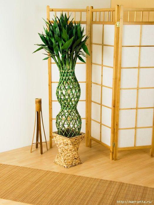 комнатный бамбук (524x700, 167Kb)