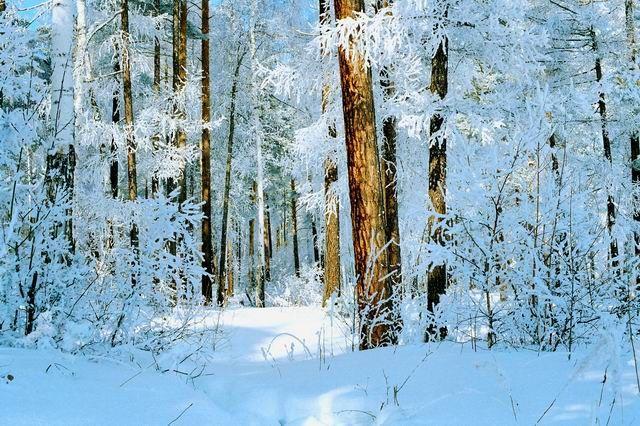 0010 Зимний лес (600x400, 97Kb)