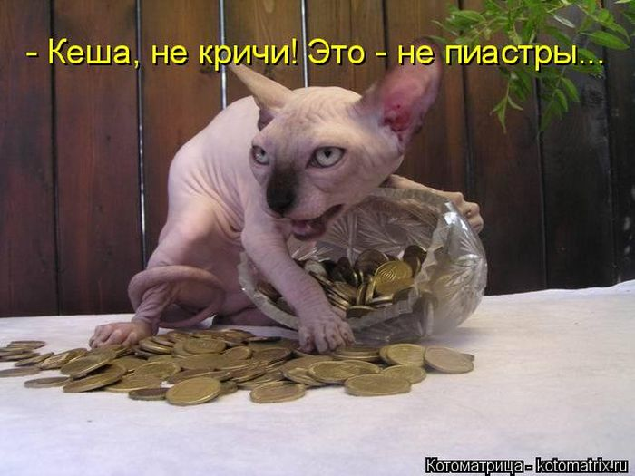 5640974_50000000000000000 (700x525, 55Kb)