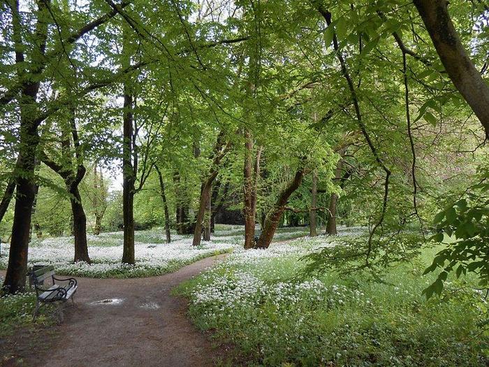 04-Pomlad_v_BotaniДЌnem_vrtu (700x525, 563Kb)