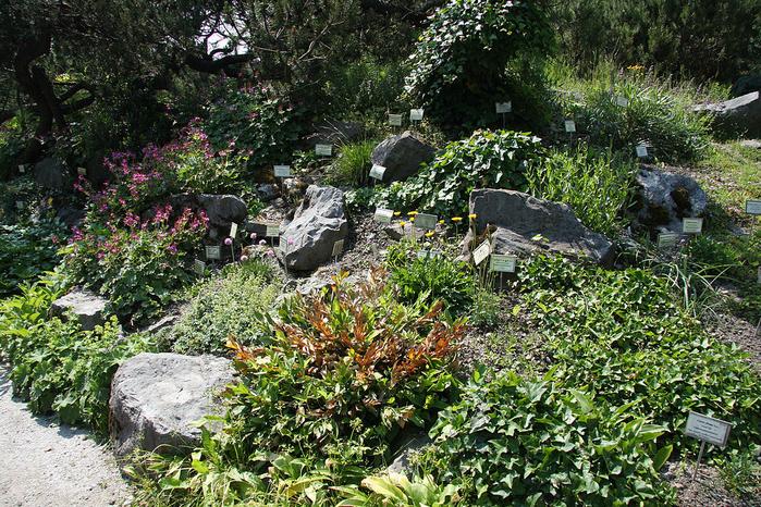 102-Ljubljana_Botanic_Garden_-_rockery (700x466, 667Kb)