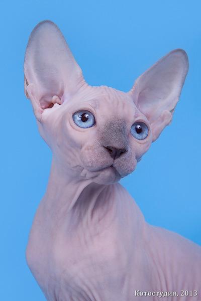 cat012 (400x600, 126Kb)
